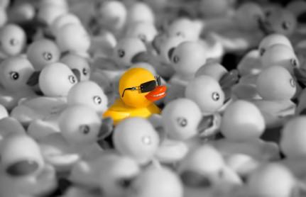 Duck_iStock_000000775980XSmall